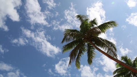 Palm tree and blue sky with clouds Stock Video Footage