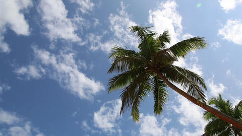 Palm tree and blue sky with clouds Footage