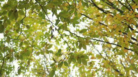 Autumn Branch stock footage