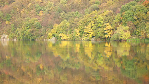Autumn Forest by the River Stock Video Footage