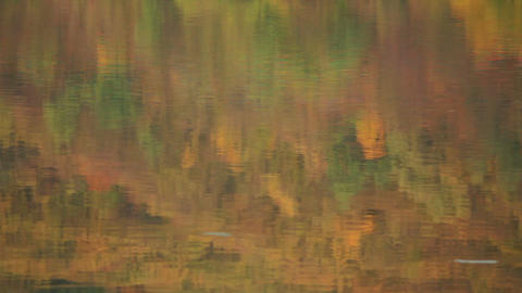 Reflection of Trees in Water Stock Video Footage