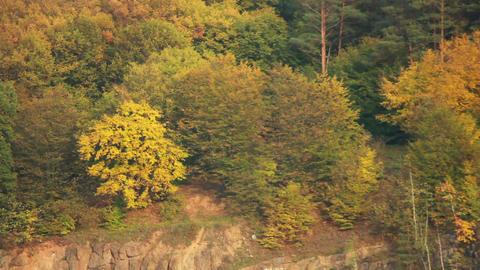 Tree on Rock Footage