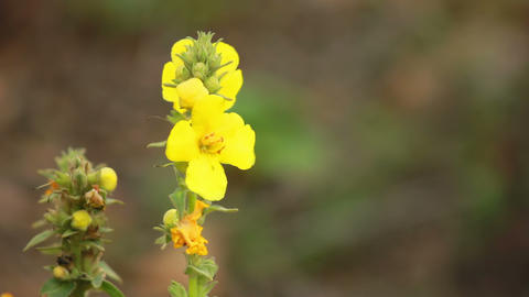 Yellow Flower Footage