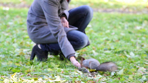 Squirrel in the park produces nuts Stock Video Footage