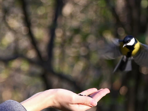 Birds eat the seeds with your hands Footage