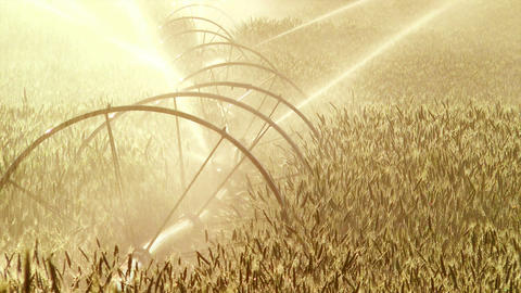 Agriculture Sprinkler Stock Video Footage