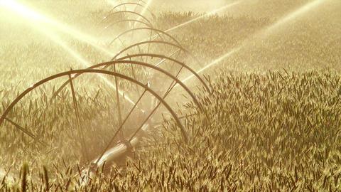 Agriculture Sprinkler Stock Video Footage