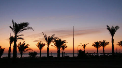 morning landscape with palm trees Stock Video Footage