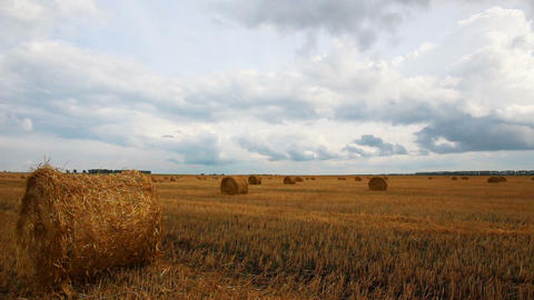 landscape with harvested bales of straw in field - Footage