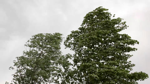 trees in strong wind under storm sky Stock Video Footage