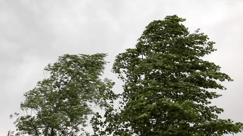 trees in strong wind under storm sky Footage
