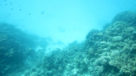 fish among corals under water in Red Sea Footage