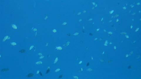 fish under water in Red Sea Stock Video Footage