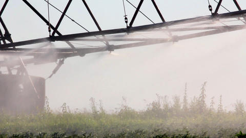 irrigation of a potato field Stock Video Footage