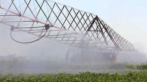 irrigation of a potato field Footage