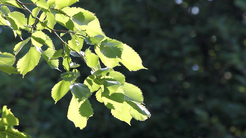 bright summer leaves in sunlight Stock Video Footage