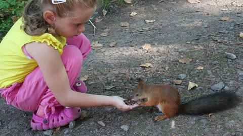 little girl feeding squirrel with nuts in park Footage