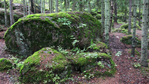 moss-covered trees in park of Monrepo - Vyborg Rus Footage