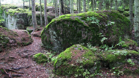 moss-covered trees in park of Monrepo - Vyborg Rus Stock Video Footage