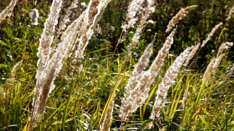 stems of dry grass Stock Video Footage