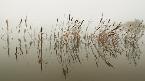 lake in mist - stems of reeds reflected in water Footage
