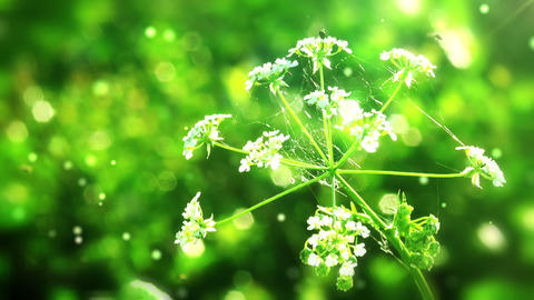 Flower on green folliage background with flying pa Stock Video Footage