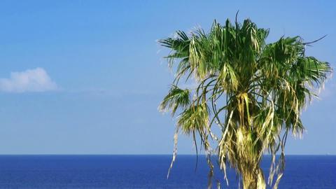 Palmtree and sea. HD 1080 Stock Video Footage