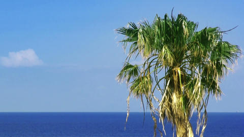Palmtree and sea. HD 1080 Footage