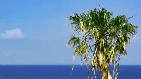 Palmtree and sea. HD 1080 Stock Video Footage