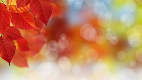 Fall Bokeh Dot Background stock footage