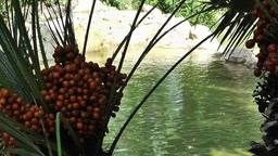 Mediterranean Palm Tree Garden 4 pond Stock Video Footage