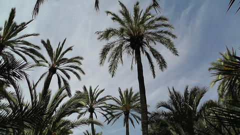 Mediterranean Palm Tree Garden 6 Footage