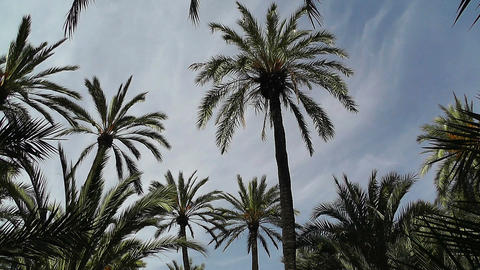 Mediterranean Palm Tree Garden 6 Stock Video Footage