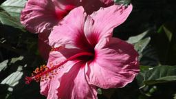 Mediterranean Palm Tree Garden 8 flower Stock Video Footage