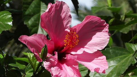 Mediterranean Palm Tree Garden 10 flower Stock Video Footage
