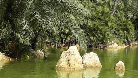 Mediterranean Palm Tree Garden 14 Stock Video Footage