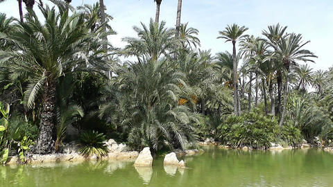 Mediterranean Palm Tree Garden 16 Footage
