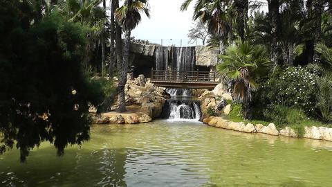 Mediterranean Palm Tree Garden 18 Stock Video Footage