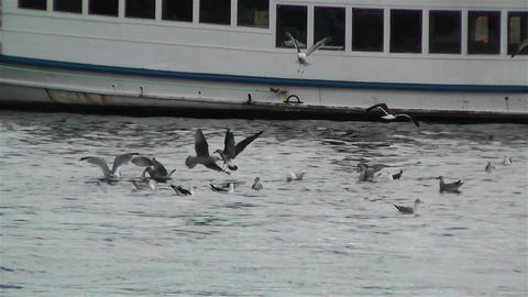 Seagulls in Stockholm Stock Video Footage