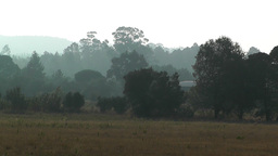 Trees in the Mist 1 Stock Video Footage