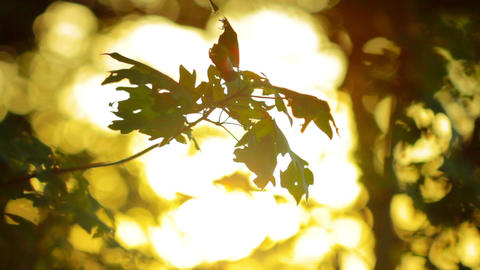 morning. the shade of the forest at sunrise Stock Video Footage
