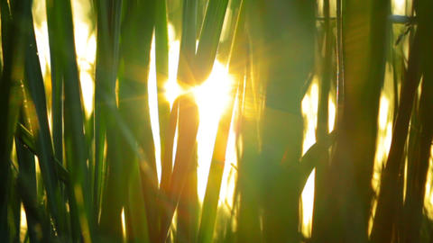 the rays of the sun through the green grass Stock Video Footage