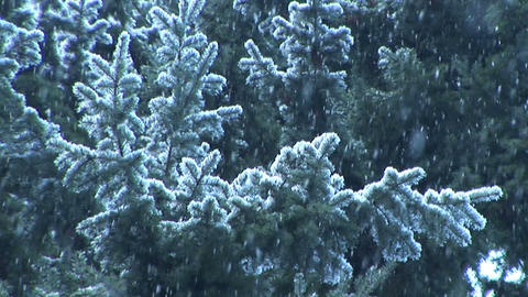 Snow Falling on evergreens, slow motion Stock Video Footage
