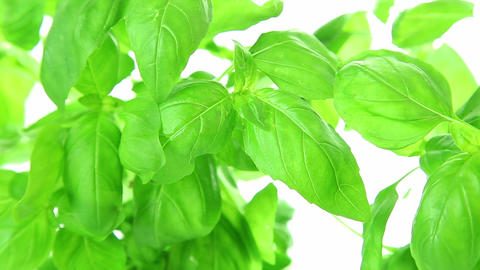 Fresh basil leaves background Stock Video Footage