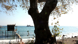 A TREE NEXT THE SEA Stock Video Footage