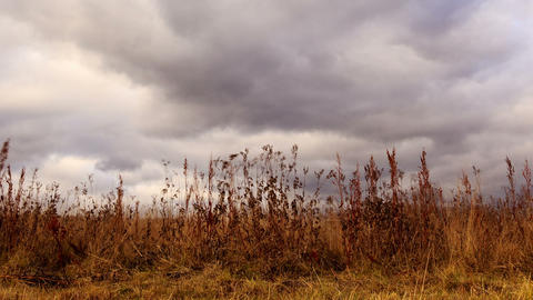 Clouds over dry grass. Zoom. Time Lapse Stock Video Footage