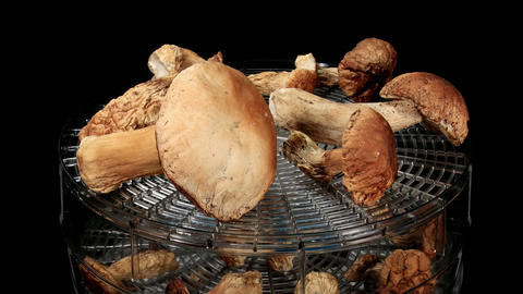 Drying Mushrooms In Electric Driers On The Black B stock footage