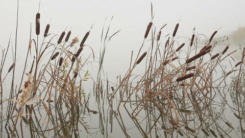 lake in mist - stems of reeds reflected in water Stock Video Footage