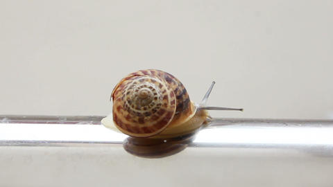 snail moving on metal tube Stock Video Footage
