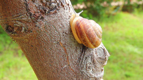 snail on tree Stock Video Footage